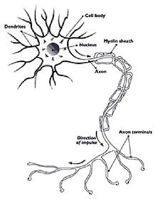 Diabetic Peripheral Neuropathy Wikipedia - Diabetic