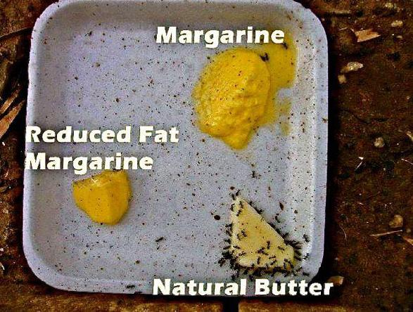 is margarine better than butter for diabetes